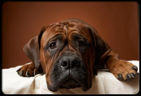 собака - аллерген