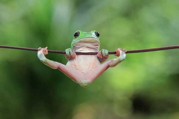 лягушка подтягивается на турнике