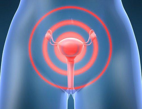 органы гинекологии