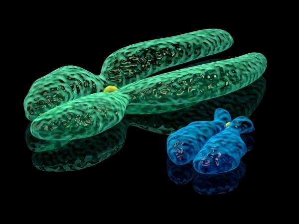 3D визуализация X и Y-хромосом