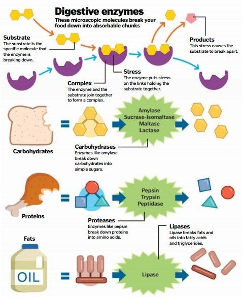 digestive-enzimes