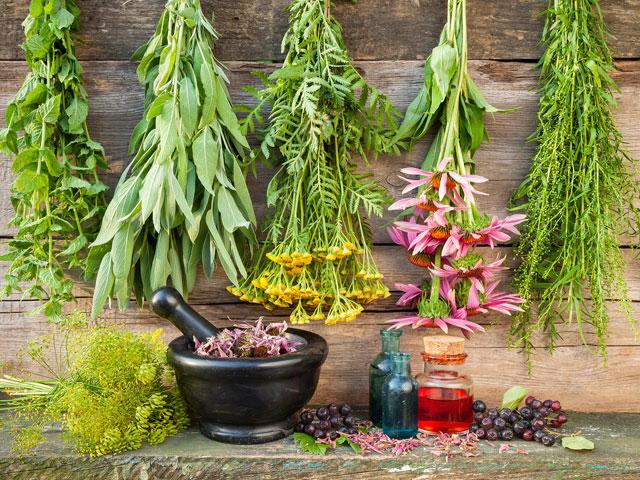 Растения с терапевтическими свойствами