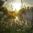 растения и их применение