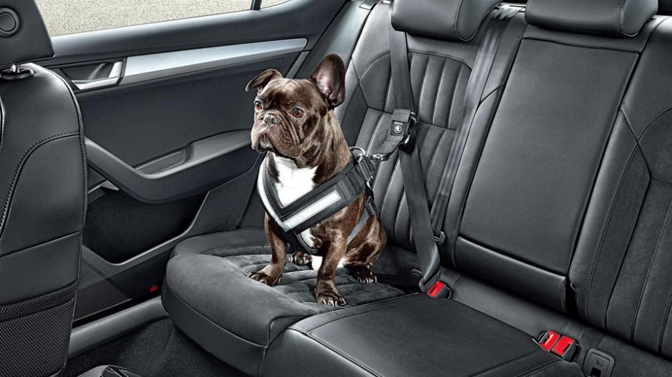 Ремни безопасности собаки