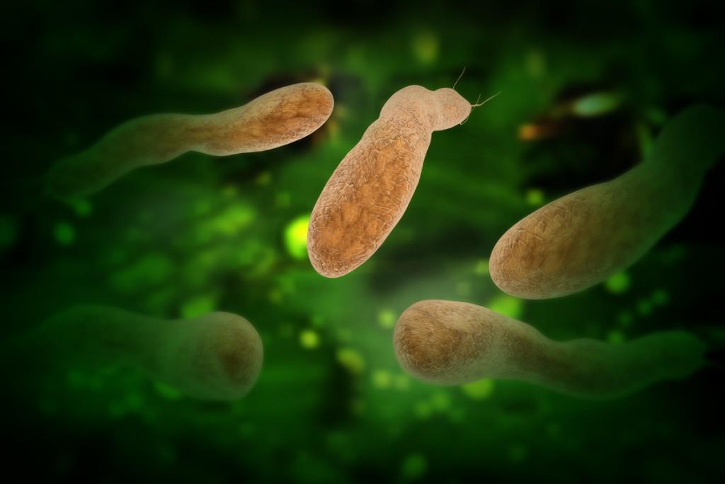 изображение Helicobacter pylori