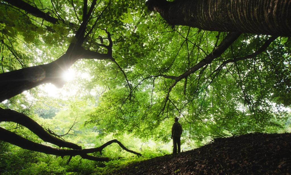 Деревья в народной медицине