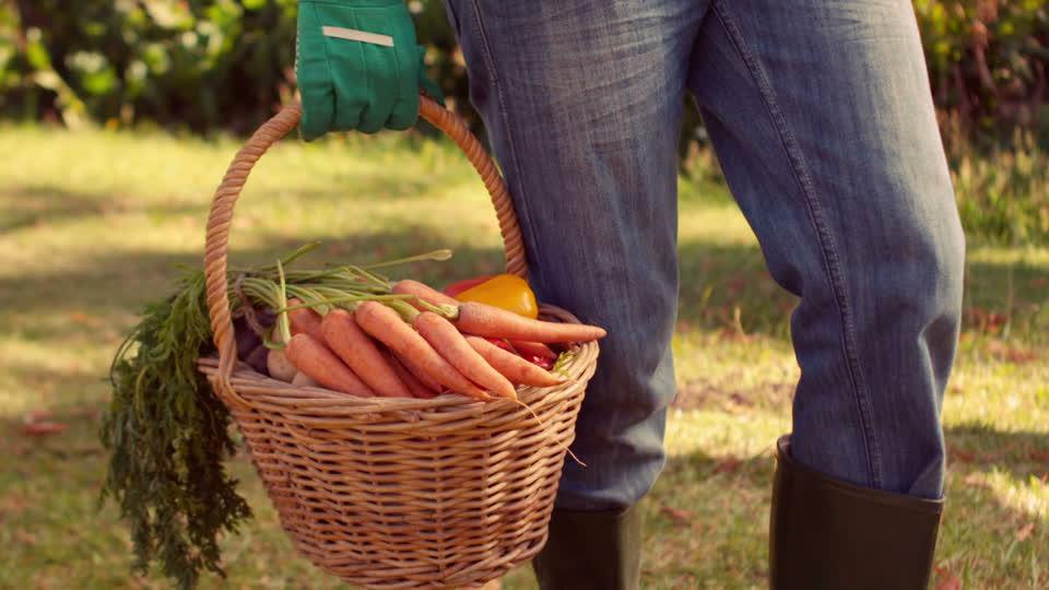 морковь в корзинке