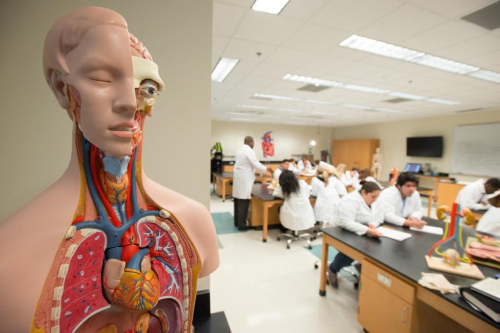 студенты изучают анатомию