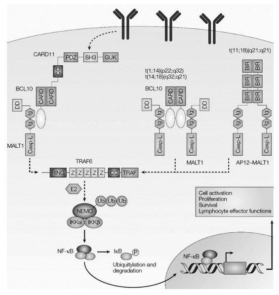 хромосомные транслокации
