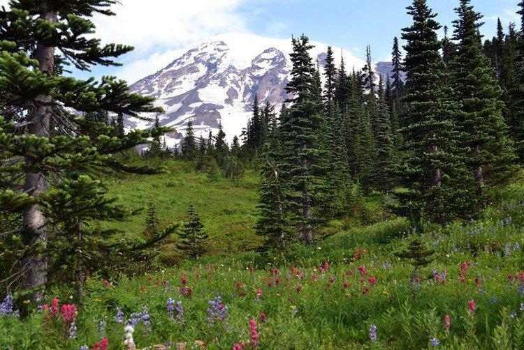 Северо-американский пейзаж с травами