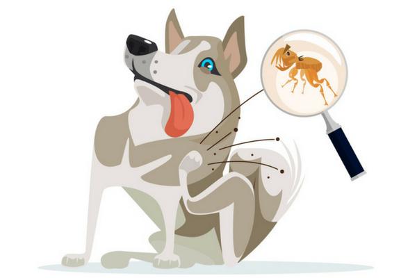 блоха кусает собаку