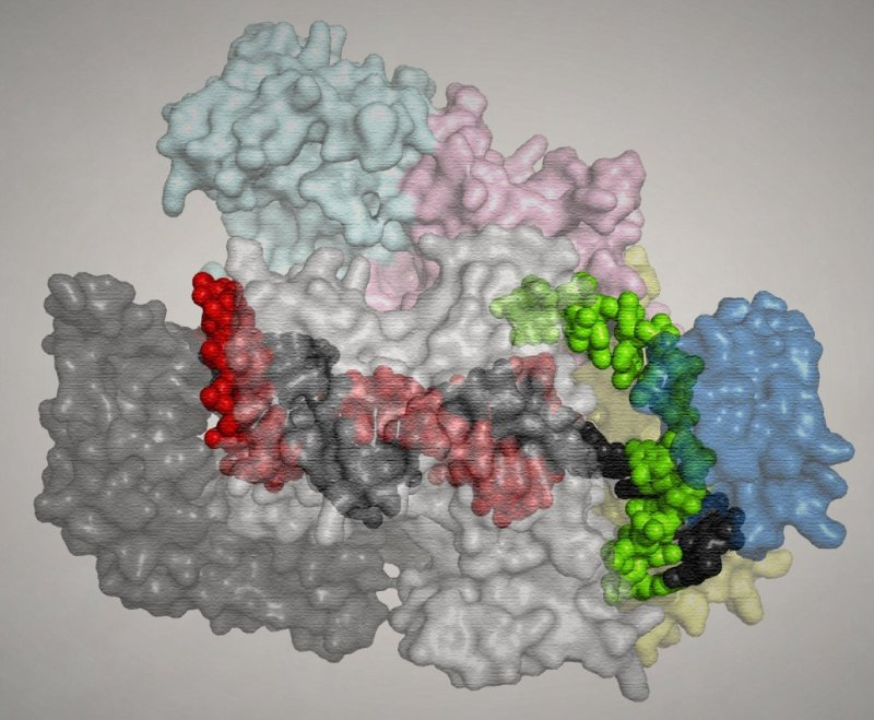 Представление белка Cpf1