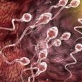 Количество сперматозоидов у мужчин