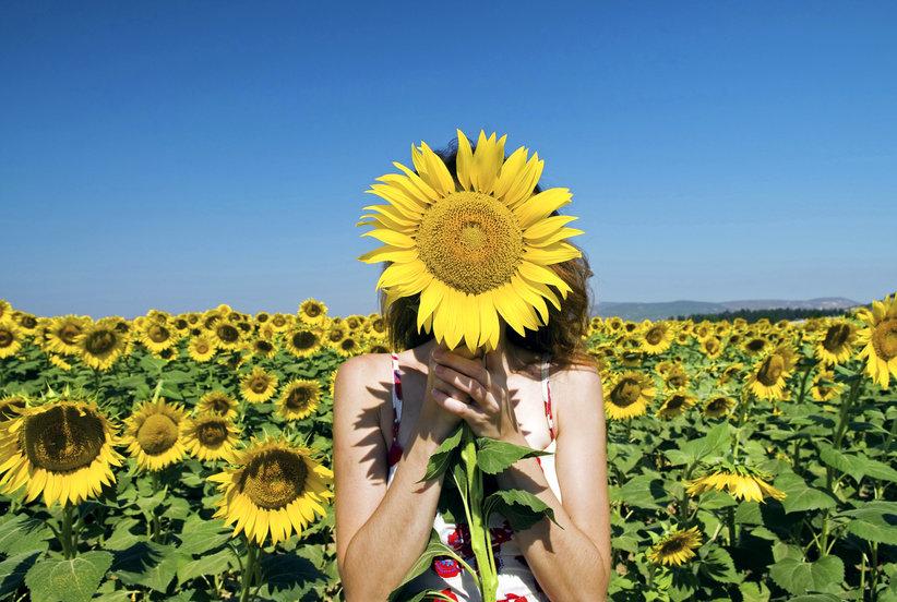 цветет подсолнечник