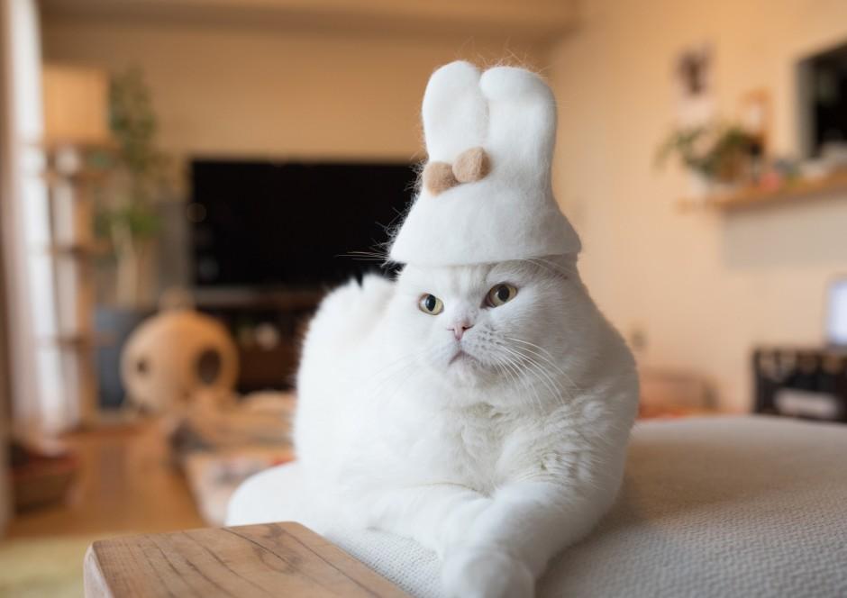 японская белая кошка