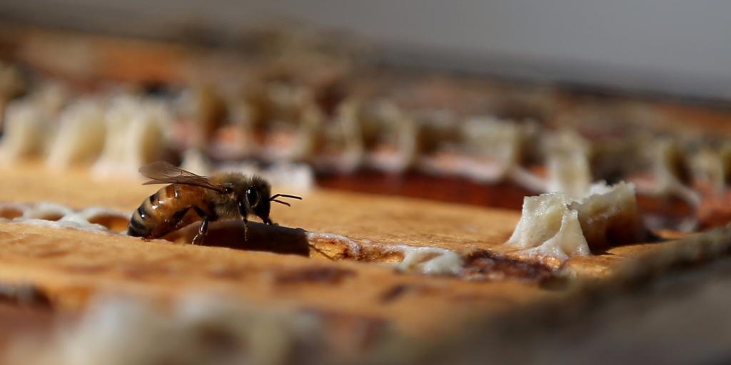 Пчелка делает мед