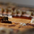 Как отличить поддельный мед на рынке