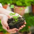 5 полезных свойств петрушки