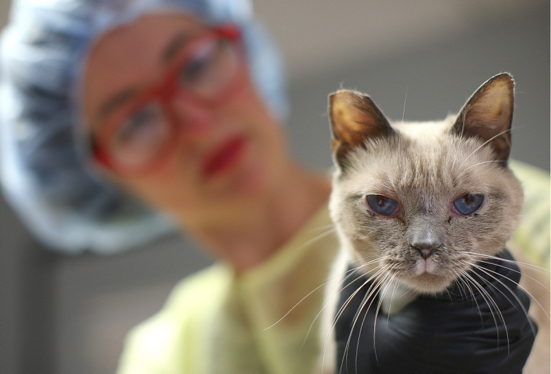 Гельминты у кошек