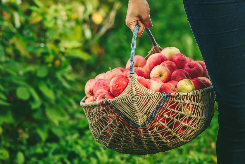 Сколько яблок в день нужно есть