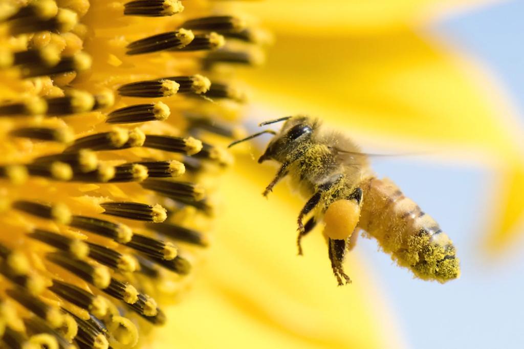 Жало пчелы застряло в горле