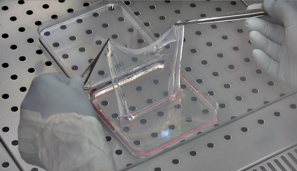 лист кожи из культивируемых клеток