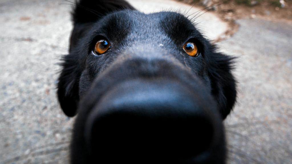 Собаки могут определить рак по запаху
