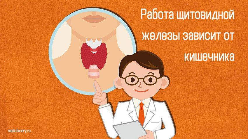 Работа щитовидной железы зависит от кишечника