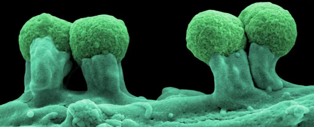 полусинтетические организмы