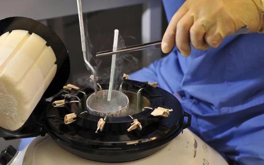 замороженные эмбрионы