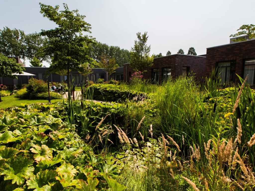 здания в голландском поселении для больных деменцией