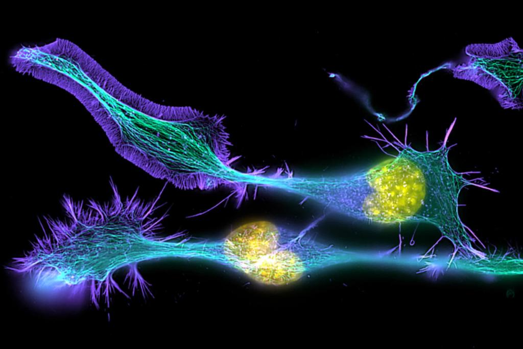Развитие нервных клеток