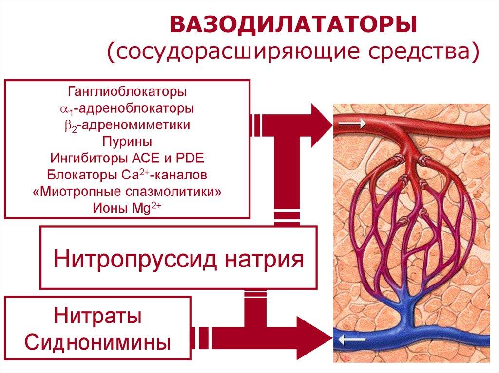 Вазодилататоры