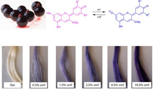 Антоцианы из кожи черной смородины красят волосы
