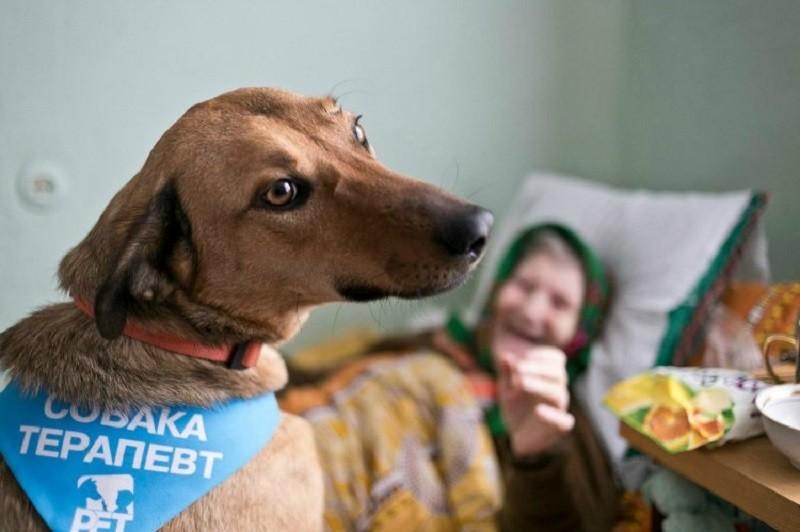 собака терапевт